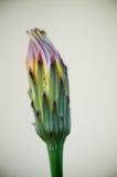 Одиночный крупный план 3 цветка Стоковые Изображения RF
