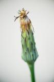 Одиночный крупный план 2 цветка Стоковое фото RF