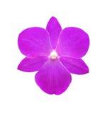 Одиночный розовый изолированный цветок орхидеи стоковые изображения