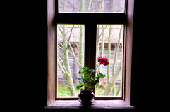 Одиночный цветок Стоковые Фотографии RF