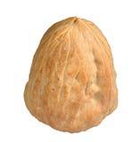 Один грецкий орех Стоковое Изображение RF