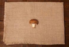 Один гриб на салфетке Стоковое фото RF