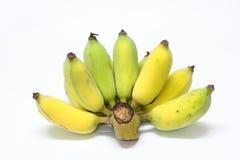 Один зрелый гребень awak pisang Стоковые Фото