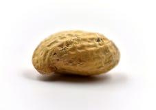Один изолированный арахис Стоковые Изображения RF