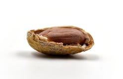 Один изолированный арахис Стоковая Фотография RF