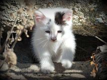 Один котенок фермы в цвете Стоковое Изображение RF