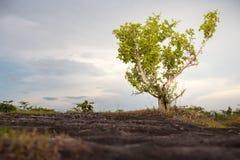 один красивейший вал захода солнца лета ландшафта зеленого цвета поля Стоковая Фотография RF