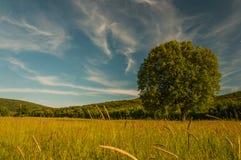 один красивейший вал захода солнца лета ландшафта зеленого цвета поля Стоковые Фотографии RF