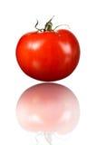 Один красный томат и свое отражение Стоковое Изображение