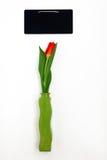 один красный тюльпан в вазе и зеленой доске мела для изолированных примечаний Стоковое Изображение