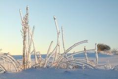 Один морозный день Стоковые Изображения