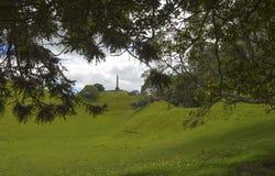 Один парк Окленд Новая Зеландия холма дерева Стоковая Фотография
