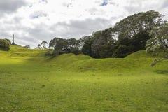 Один парк Окленд Новая Зеландия холма дерева Стоковые Фото