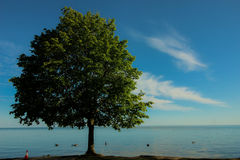 Один пункт дерева Стоковая Фотография RF