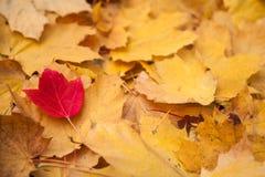 Один розовый лист Стоковое Изображение