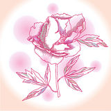Один розовый пион иллюстрация штока