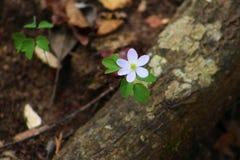 Один сиротливый белый цветок Стоковое Изображение