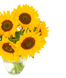 Один солнцецвет bight Стоковое Изображение RF