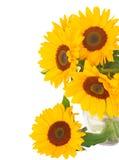Один солнцецвет bight Стоковая Фотография