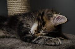 Один спать котенка Стоковые Изображения RF