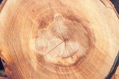 Один текстурированный отрезок дерева Стоковые Фотографии RF