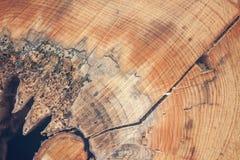 Один текстурированный отрезок дерева Стоковое Изображение RF