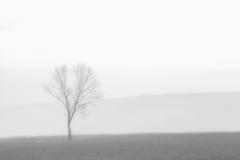 Один туманный ландшафт дерева Стоковые Фотографии RF