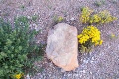 Один утес отдыхая на кровати крошечных камней Стоковая Фотография RF