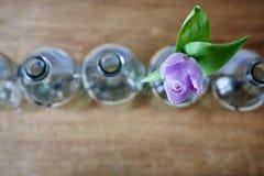 Один фиолетовый тюльпан и фокус пустых бутылок творческий Стоковые Изображения