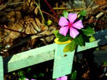Один фиолетовый цветок Стоковая Фотография RF