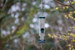 Один фидер птицы в дереве с едой Стоковая Фотография RF