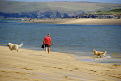 Один человек и его собаки Стоковые Фото