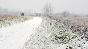 Один экипаж лошади на дороге зимы видеоматериал