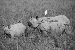 Один horned носорог Стоковое Изображение RF