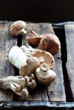 Одичалые грибы Стоковая Фотография