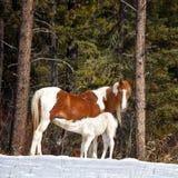 Одичалые лошади Стоковое Фото