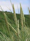 Одичалые травы Стоковое фото RF