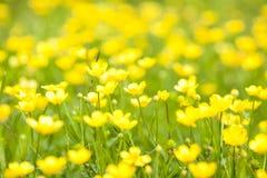 Одичалые цветки Стоковое Фото