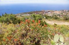 Одичалая вегетация типичная Канарских островов, моря и неба Стоковая Фотография RF