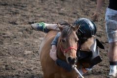 Одичалая гонка пони Стоковые Фотографии RF
