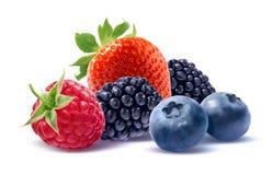 Одичалая группа ягод на белой предпосылке Стоковые Изображения RF