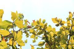 Одичалая листва против неба стоковое изображение rf