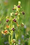 Одичалая орхидея как флористическая предпосылка Стоковое Изображение