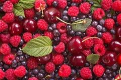 Одичалая предпосылка ягод Стоковая Фотография
