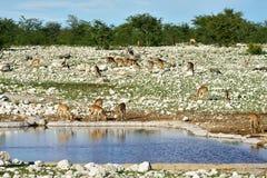 Одичалая природа, Африка Стоковое Изображение RF