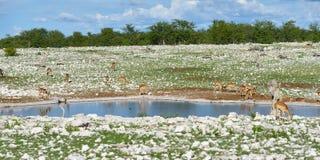 Одичалая природа, Африка Стоковая Фотография