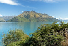 Одичалая природа Новой Зеландии Стоковое Изображение