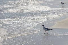 Одичалая птица на румынском пляже Стоковое Изображение