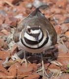 Одичалая птица на утесах Стоковые Изображения