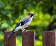 Одичалая птица Стоковые Фото